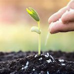 fertilizer image1